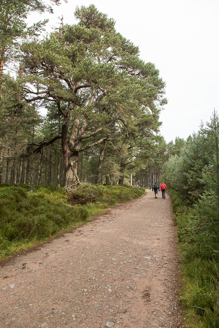 Track through The Queen's Forest