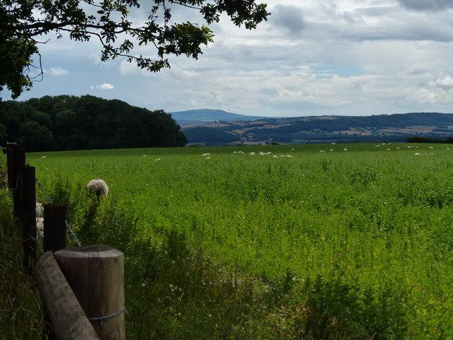 Farmland near Wenlocks Wood