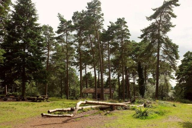 Picnic area, Haldon Forest
