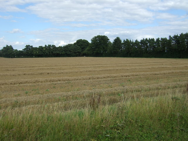 Recently harvested field off Beach Road