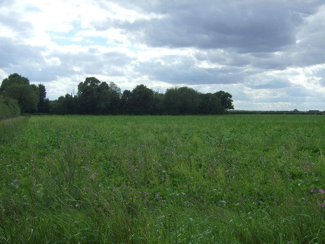 Crop field off Cottenham Road