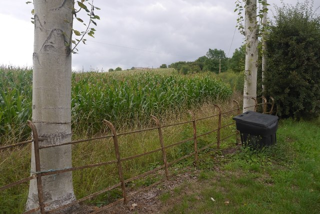 Maize below Houghton Court