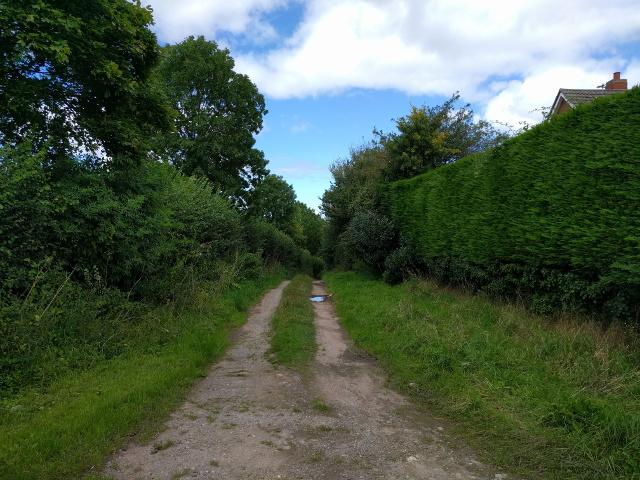 Hitchings Lane in West Lyng
