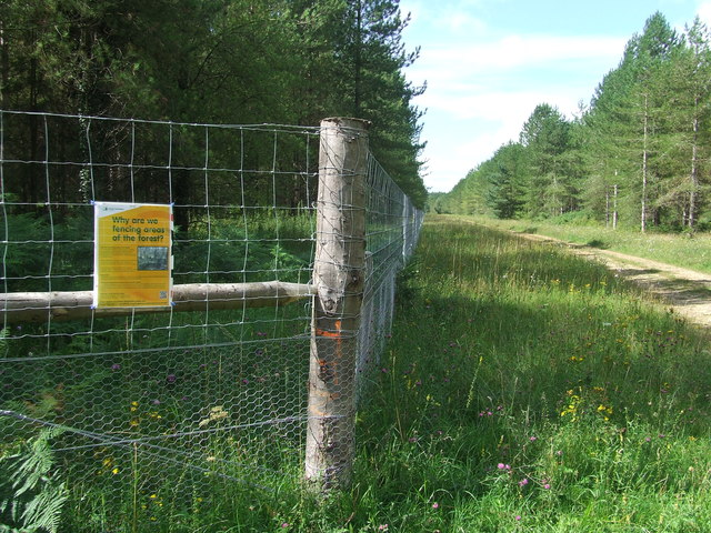 Fenced Off Section Of The Forest