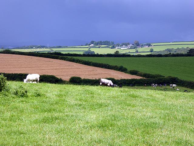 Farmland beside the Saints' Way