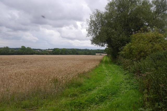 Wheat field, Upper Sapey