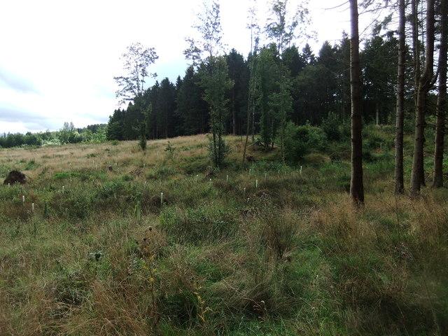 Melkinthorpe Wood