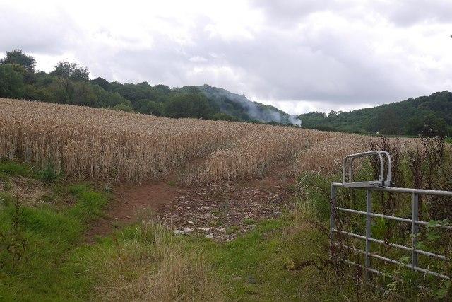 Wheat, Orleton