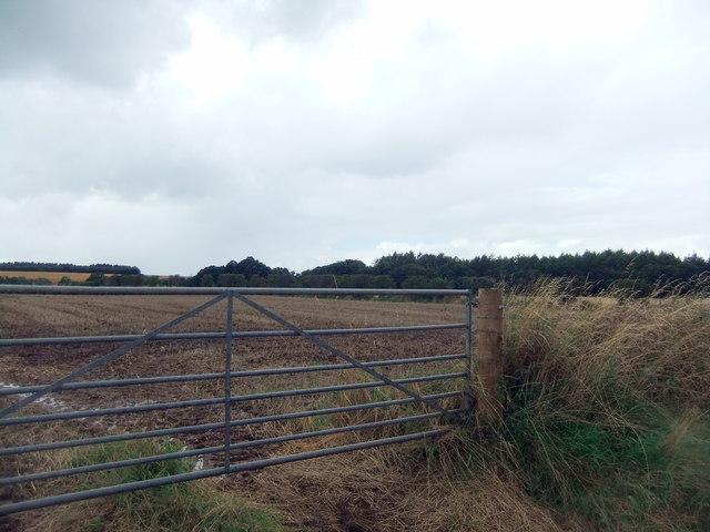 Pasture near Cliburn