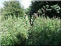 NY5625 : Overgrown bridge over Sandwath Sike by David Brown