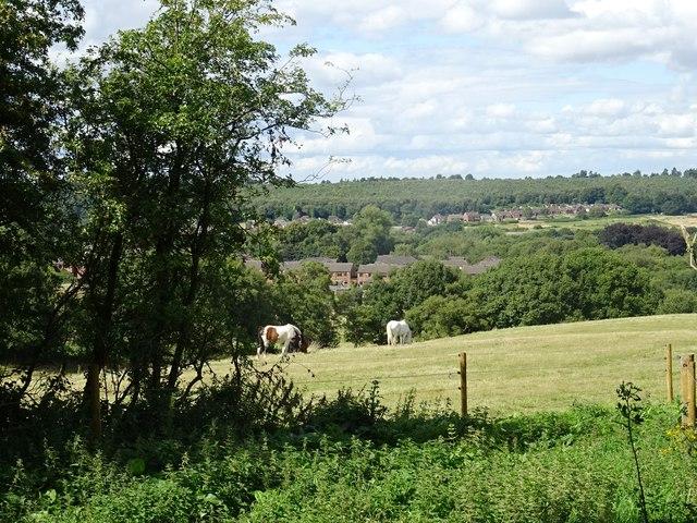 Horses on Wimblebury Hill