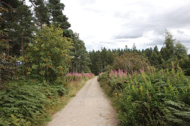 Track, Pitfichie Forest