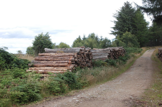 Logging, Bogmore Wood