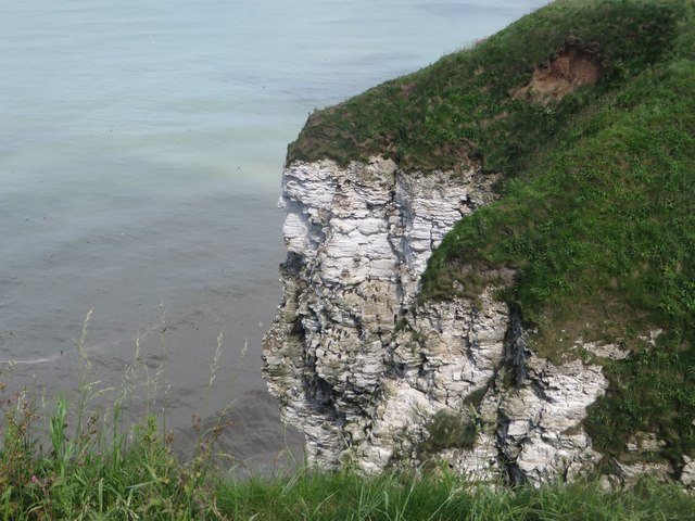 Sea bird colonies on the cliffs of Gull Nook