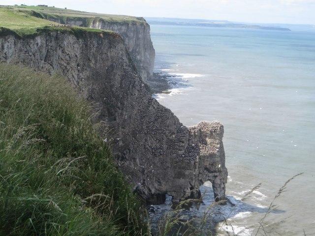 Sea bird colonies on the cliffs of Little Dor