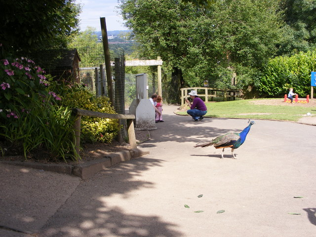 Zoo Peacock Path