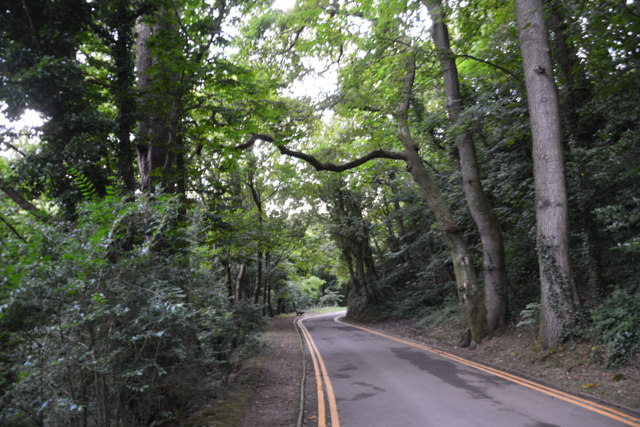 The Mumbles : Road