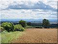 NZ2731 : Edge of wheat field below Merrington Road by Trevor Littlewood