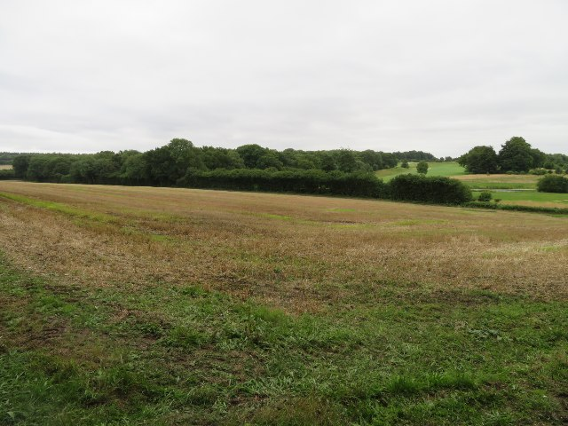Field south of Kempshott Copse