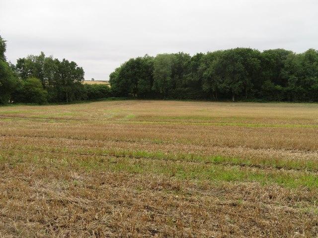 Field south of Kempshott Copse