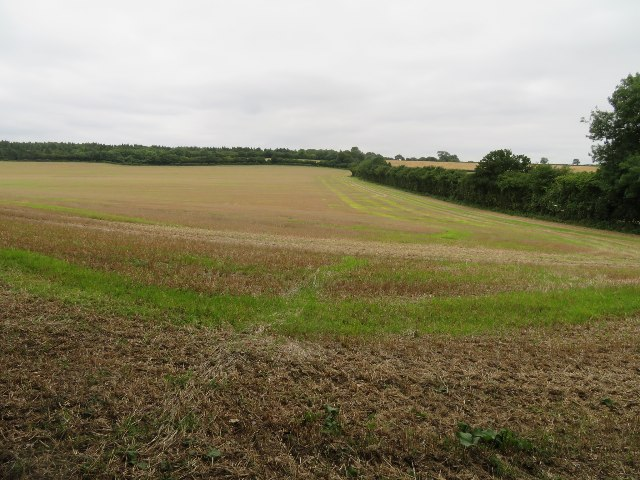 Field boundary south of Shortwood's Copse