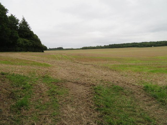 Field south of Shortwood's Copse