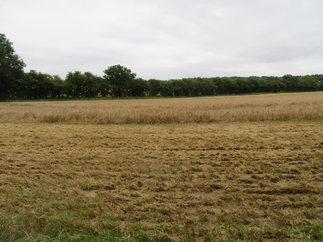 Field east of Rowley Copse