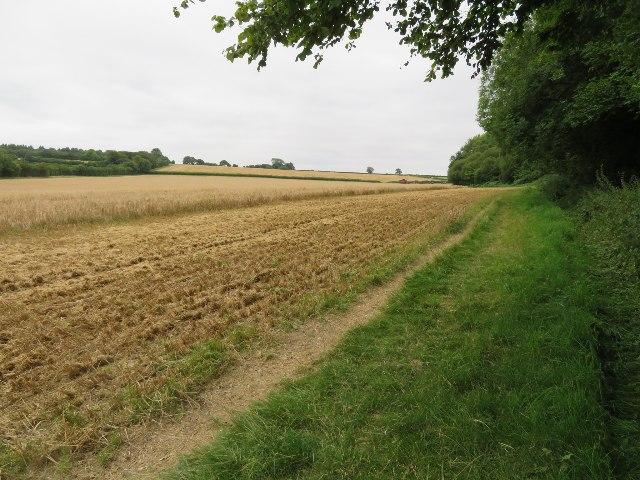 Field east of Rowley Copse