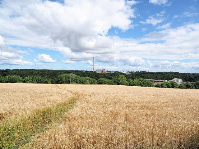 Permissive path through barley field