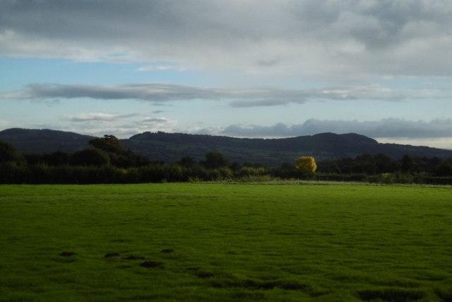 Grass, Waters Farm