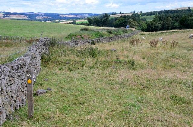 Borders Abbeys Way near Spital Tower