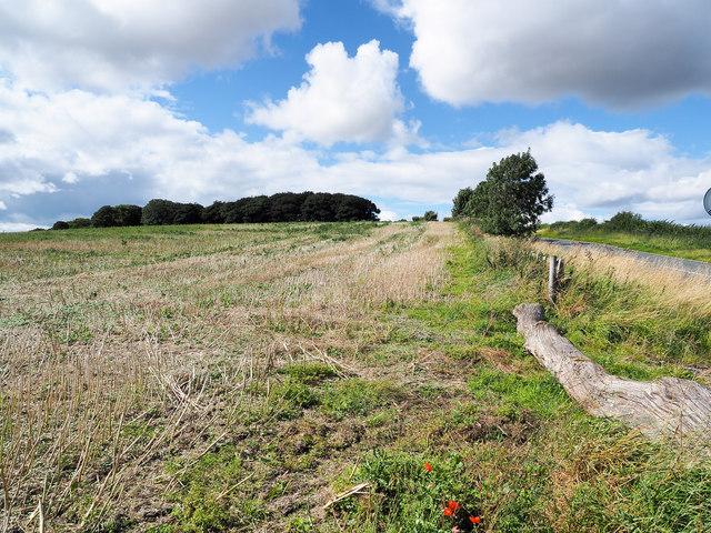 Stubble field near crossroads