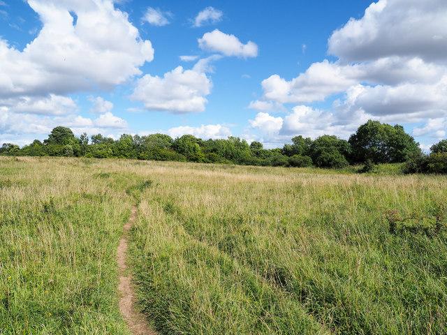 Field at Thrislington National Nature Reserve