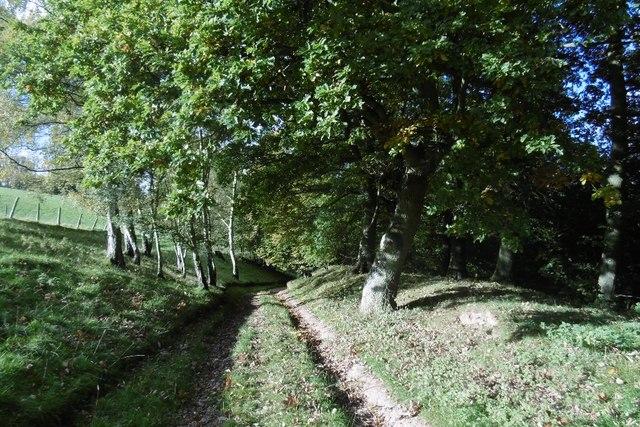 Track beneath Thrift Farm
