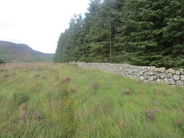 Wall alongside Durnhigh Wood