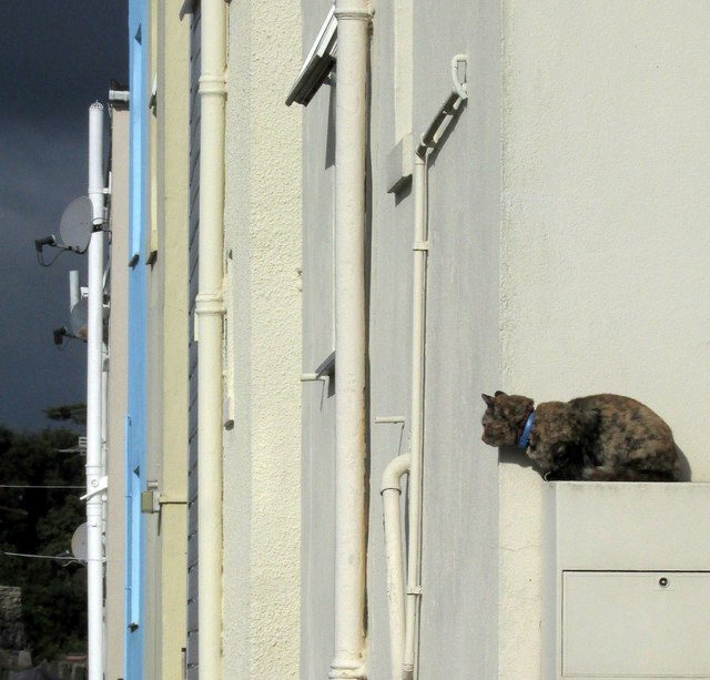 Cat, Forest Road, Torquay
