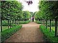 NY4930 : Pleached hornbeam walk, Newton Rigg College by Rose and Trev Clough