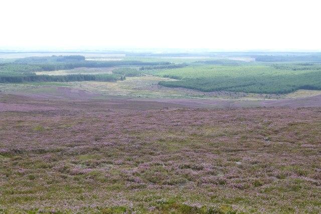 Looking across the heather