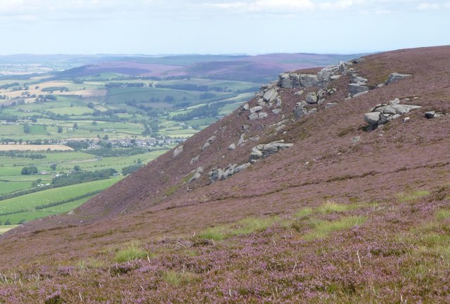 Looking across the heather