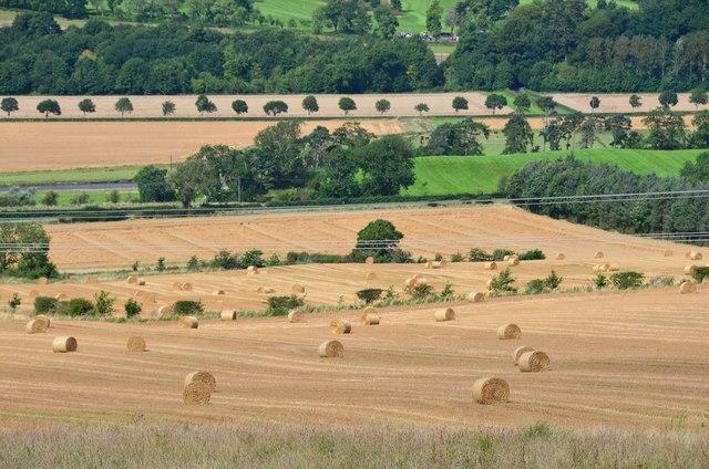 Landscape patterns near Denholm