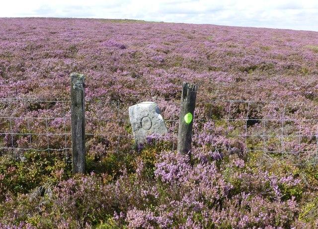 Boundary Stone on Ravens Heugh
