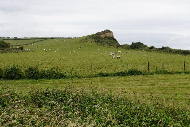 Sheep at Quantock's Head