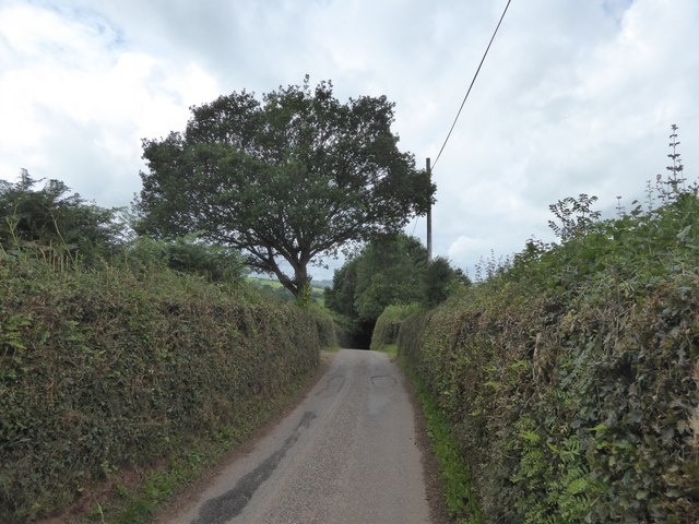 Oak tree by the road west of Force