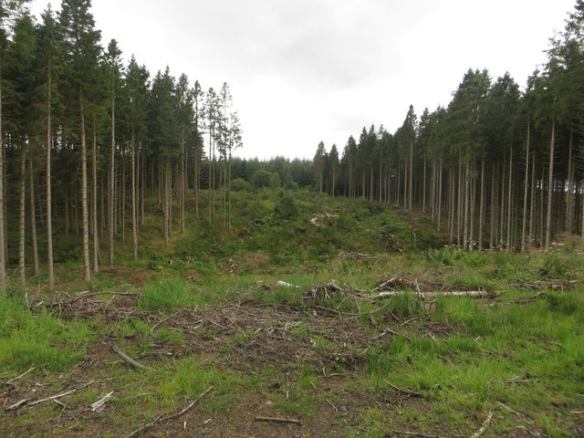 Clearfelled plantation near Pundershaw