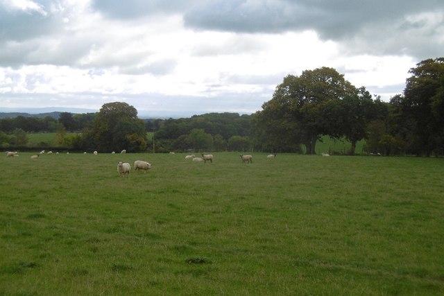 High Lane pasture