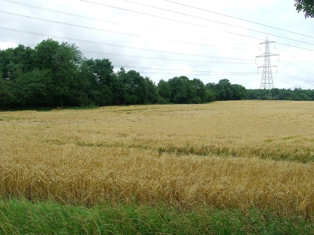 Wheat And Powerlines