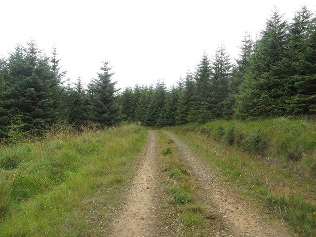 Forest track near Fairgrass Hill