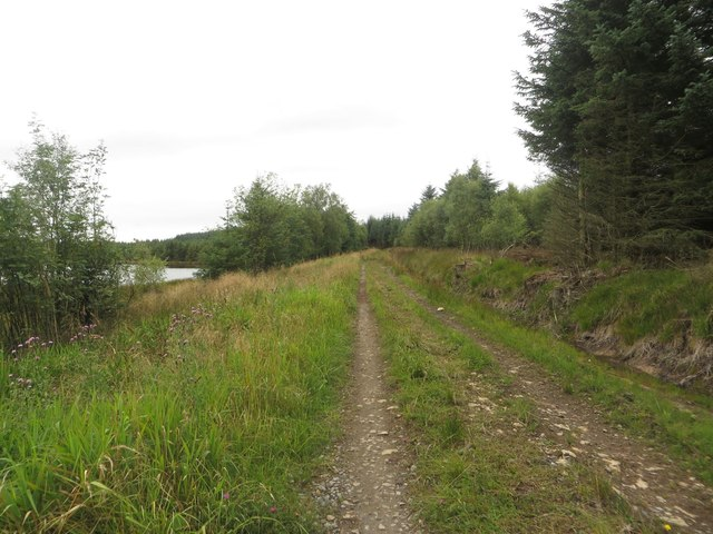 Forest track at Blackaburn Lough