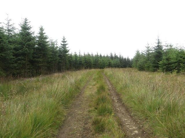 Forest track, Greenside