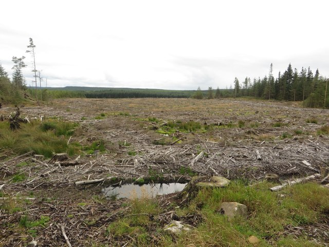 Clear felled area, Wark Forest
